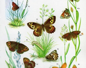 1960 Butterfly Print, plate 43 Vintage Antique Book Plate prints, 5 butterflies insects nature art illustrations