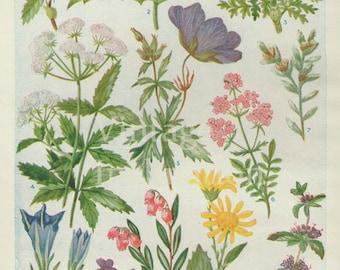 Vintage Antique 1930s Flowers botanical bookplate original lithograph art print illustration 6128