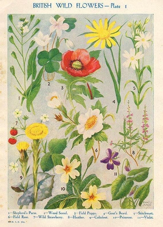 Antique Botanical print British Wild Flowers bookplate, vintage botanical flowers bookplate art print, red poppy fruits wall print wall art