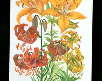 Vintage Botanical Print Antique FLOWERS, plant print botanical print, bookplate 69 art print, red yellow plants plant wall