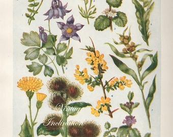 Vintage Antique 1930s Flowers botanical bookplate original lithograph art print illustration 5142