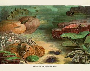 Antique Print, 1900 Marine Life Chart CORAL GARDEN water beautiful german wall art vintage color lithograph ocean illustration