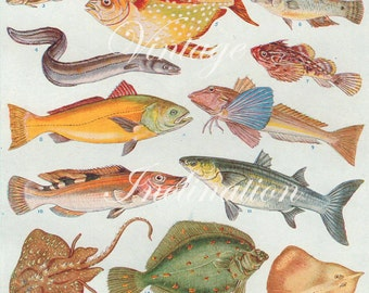 Antique Print, British Fish Chart 1930s beautiful wall art vintage color lithograph illustration bookplate