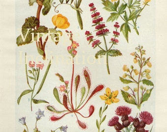 1930s Flowers of the Bogland Print