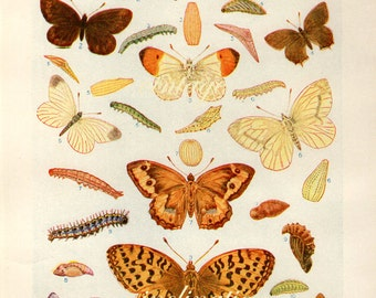 1938 Butterfly Print, PLATES 6203 6204 Vintage Antique Book Plate prints, 19 butterflies insects nature art illustrations
