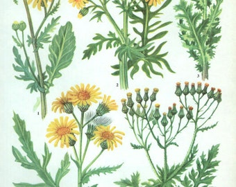 WILD FLOWERS Vintage Botanical Print Antique, yellow plant print 43  botanical print, bookplate art print, herb plants plant wall print
