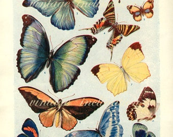 1920 Butterfly Print, PLATES 1417 1418 Vintage Antique Book Plate prints, 26 butterflies insects nature art illustrations