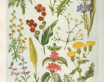 Vintage Antique 1930s Flowers botanical bookplate original lithograph art print illustration 5144