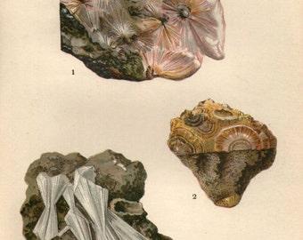 Vintage 1911 Minerals Print Antique Gems Natrolite 3 gemstones print, bookplate art print, minerals wall print wall art