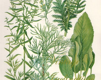 TARRAGON TANSY HERBS Vintage Botanical Print Antique, plant print 145 botanical print, bookplate art print, herb plants plant wall print