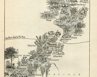 1930s Antique Vintage NEW ZEALAND Plants map original b/w map for framing