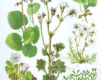 HERBS Wood Sorrell Vintage Botanical Print Antique, plant print 85 botanical print, bookplate art print, herb plants plant wall print