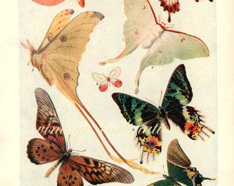 1920 Butterfly Print, PLATES 1419-1420 Vintage Antique Book Plate prints, 24 butterflies insects nature art illustrations