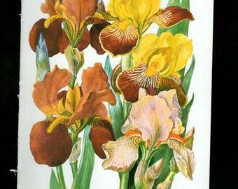 WILD FLOWERS Vintage Botanical Print Antique, yellow plant print 47 botanical print, bookplate art print, herb plants plant wall print