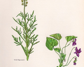 ANTIQUE BOTANICAL PRINT flowers and plants 36