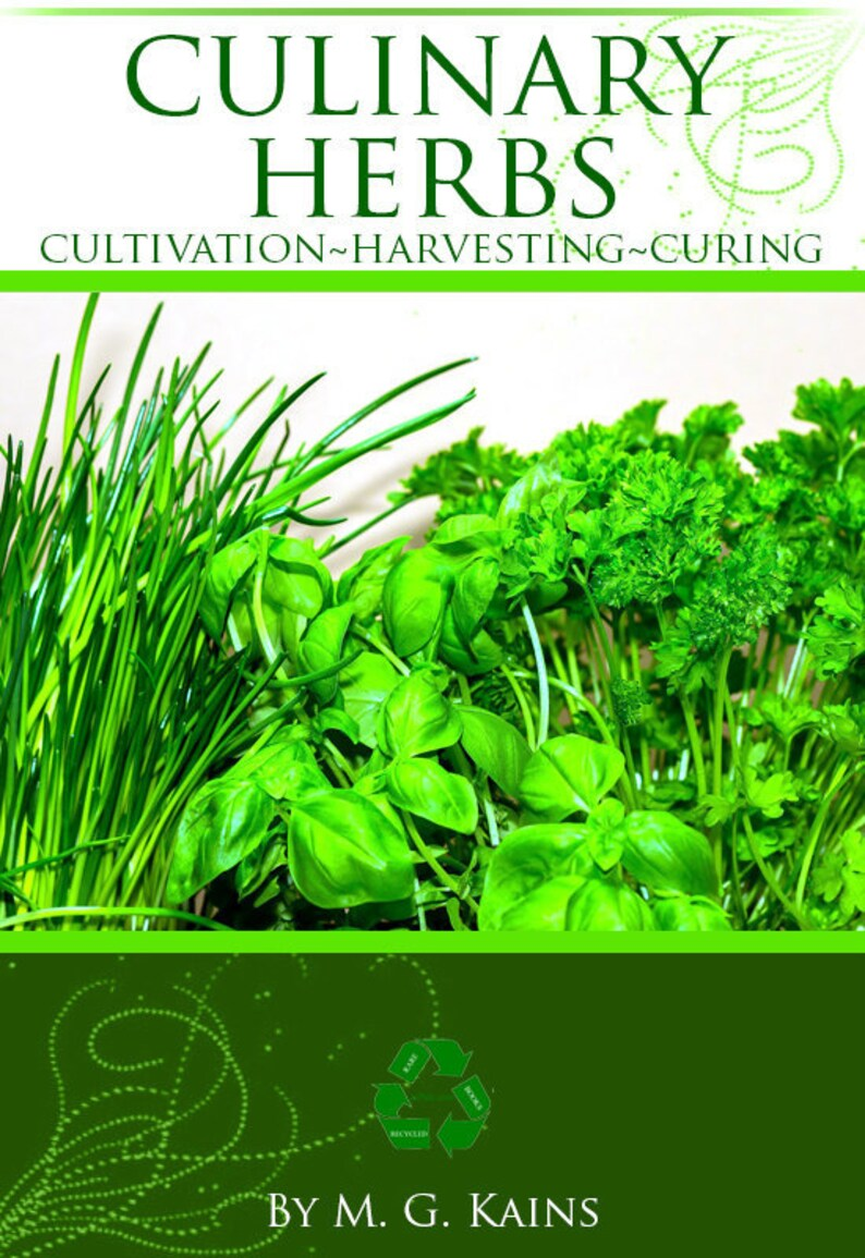 Culinary herbs; their cultivation, harvesting, curing and uses