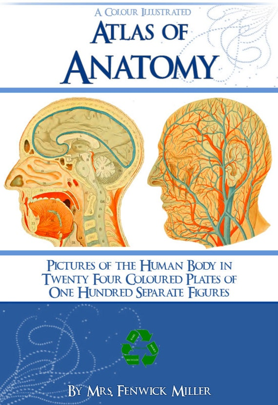Color Atlas Of Anatomy Rare Anatomical Book 61 Pages Printable Etsy