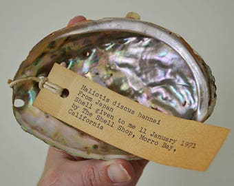 Vintage Japanese Pacific Abalone Shell - Haliotis Discus Hannai - beach ocean nautical decor