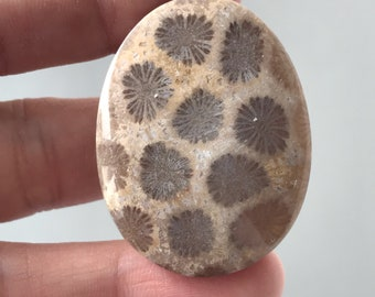 Beautiful Fossil Coral Stone 31 x 40 mm