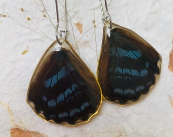 Real Butterfly wing earrings. Covered with Resin and Stainless Steel kidney Hooks. Reversible. Hypoallergenic