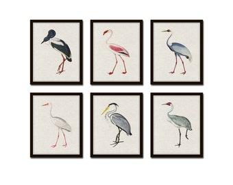 Tropical Sea Birds Set of 6, Vintage Bird Prints, Giclee, Art Print, Coastal Art, Wall Art, Coastal Decor, Beach House Art, Gallery Wall Art