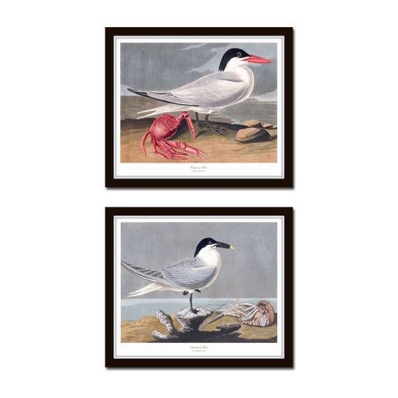 Audubon Shore Bird Art Prints set of 6 unframed Coastal Wall Decor