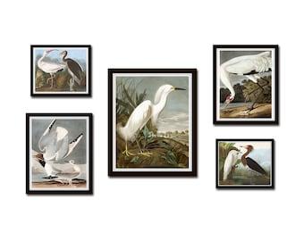 Vintage Audubon Birds Gallery Wall Set No. 3, Coastal Art, Sea Bird Prints, Audubon Bird Prints Wall Art, Art Prints, Set of 5