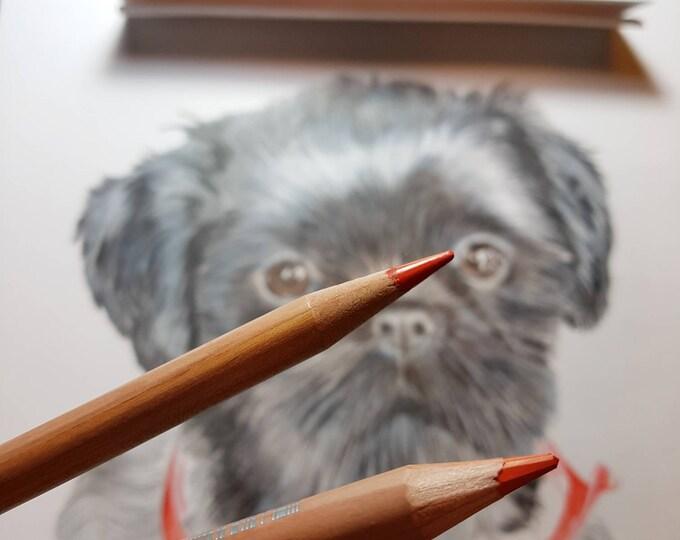 Portret van je eigen huisdier.