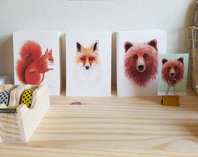 Hele set, 4 Postkaarten 10x15 cm + envelop, beer+vos+wasbeer+eekhoorn 10x15 cm