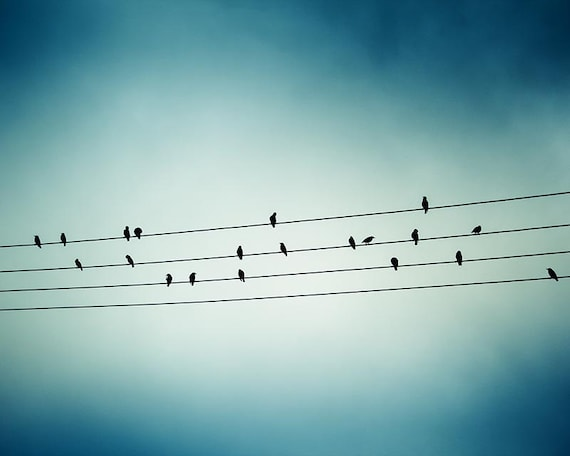 Vogel Druck Vögel auf einem Draht-Wand-Kunst-Natur Druck Natur | Etsy