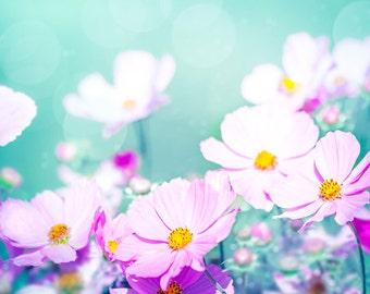 flower photography pink floral wall decor 8x10 11x14 24x36 fine art photography floral spring photography cosmos aqua teal nursery decor