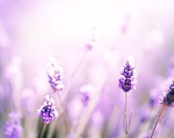 nature photography flower lavender photography floral wall decor 8x10 24x36 fine art photography spring lilac lavender purple nursery decor