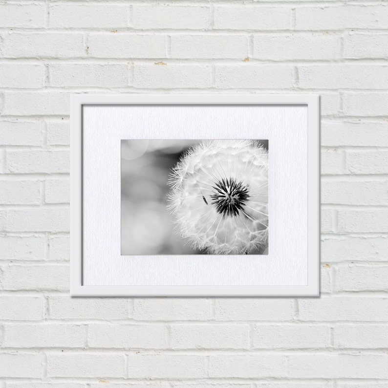 black and white wall art dandelion print black and white art fine art photography dandelion nature prints floral wall art monochrome gray