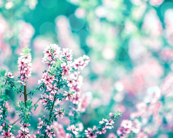 Nature Photography Floral Flower Photography Spring Decor 8x10 Etsy