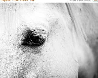 ON SALE horse art horse decor Black white horse photography horse wall art black white horse print nature photography fine art country home