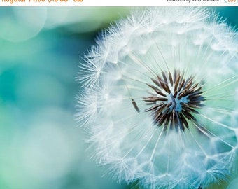 ON SALE teal home decor Nature photography dandelion print floral dandelion wall art floral photography dandelion botanical art nursery deco
