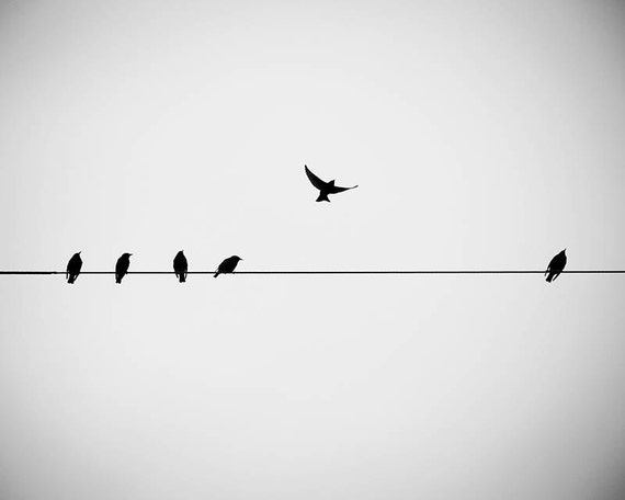 Large Photography Print Birds On A Wire Black And White Etsy
