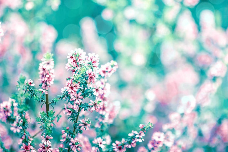 nature photography floral flower photography spring decor 8x10 11x14 fine art photography floral blossom photography spring aqua teal pink