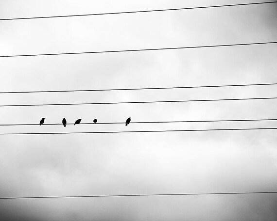 schwarz-weiß Fotografie Vögel auf einen Draht 8 x 10 8 x 12 | Etsy