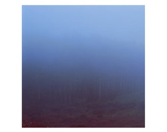 Print Only - Marin Headlands California San Francisco Film Fog Trees Forest Travel Landscape Nature Color Photography Photograph Square