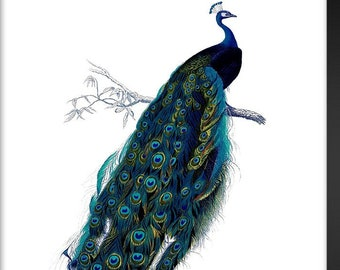 Peacock Nursery Etsy