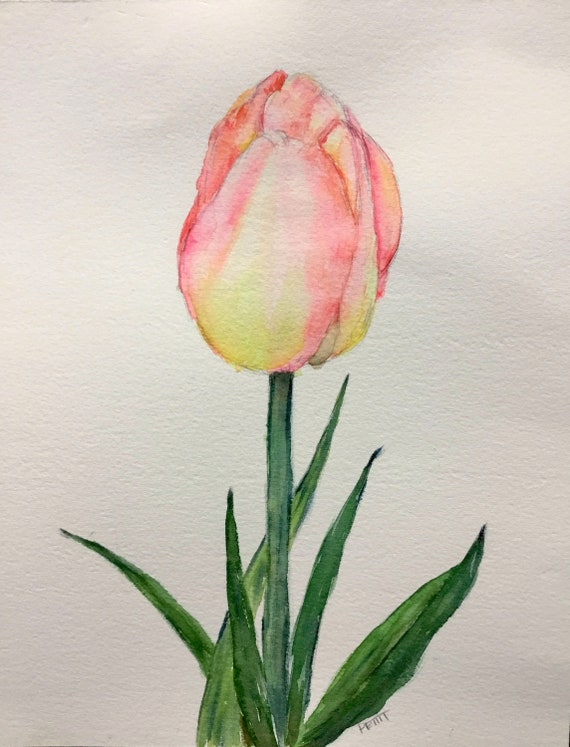 Tulip Pink And Yellow Tulips Single Bloom Beautiful