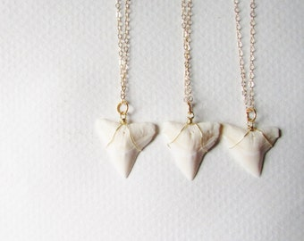 Shark Tooth Necklace / Gold Shark Tooth Necklace / Shark Necklace / Dainty Gold Necklace / Gold tooth Necklace / Tooth Jewelry