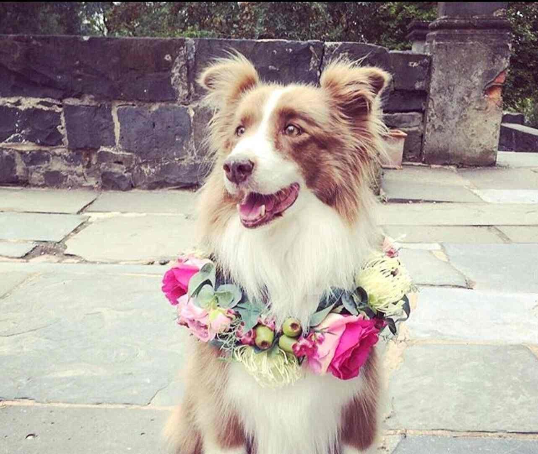 Dog Puppy Flower Crown Dog Puppy Flower Collar Flower Etsy