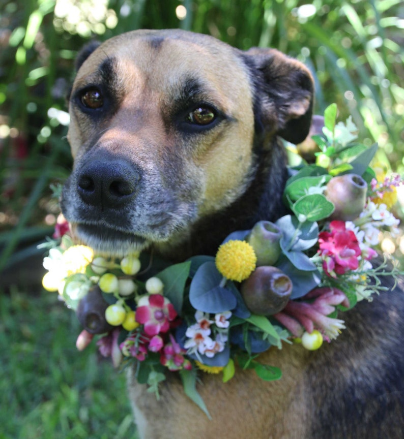 Dog flower crown collar.  Flower garland for dogs. image 0