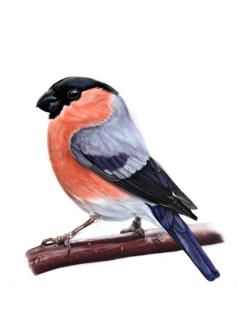 Drukuj Ilustracja Ilustracja Gil Ptak Sztuka Zwierzę Etsy