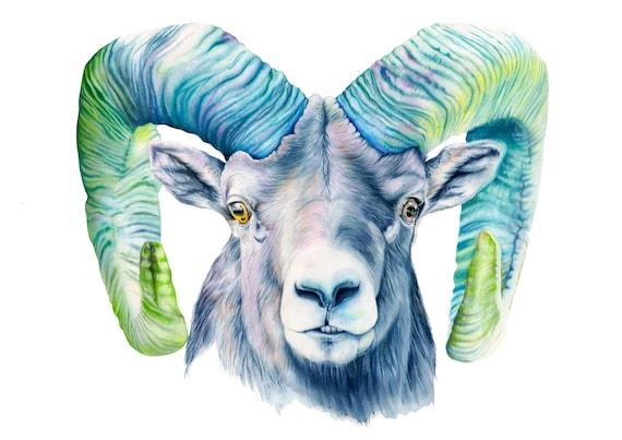 RAM goat art print sheep watercolour animal print giclee print | Etsy