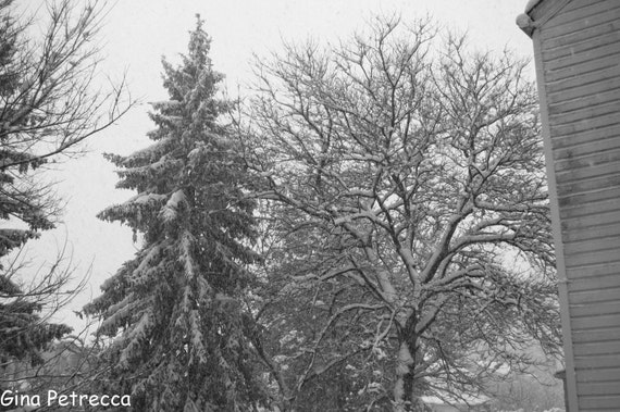 black and white snowy trees photo print photography 11x14