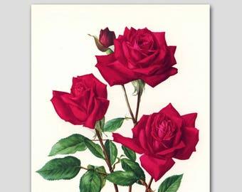 "1960s ""Christian Dior"" Red Rose Art, Vintage Paris Bedroom Wall Decor, Botanical Print No. 52"