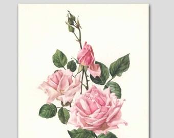 """Rose Art, Vintage Cottage Chic Decor, 1960s Pink Flower Print --- """"La France"""" No. 5"""